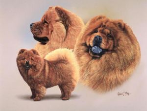 Signed Multistudy Chow Chow Print MS1015
